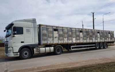 Перевозка животных и скота 8-965-920-08-80 - Тамбов, цены, предложения специалистов